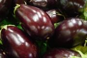 Patlidžan - plod koji se lagano priprema