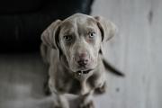 Istina: uz psa je lakše ozdraviti